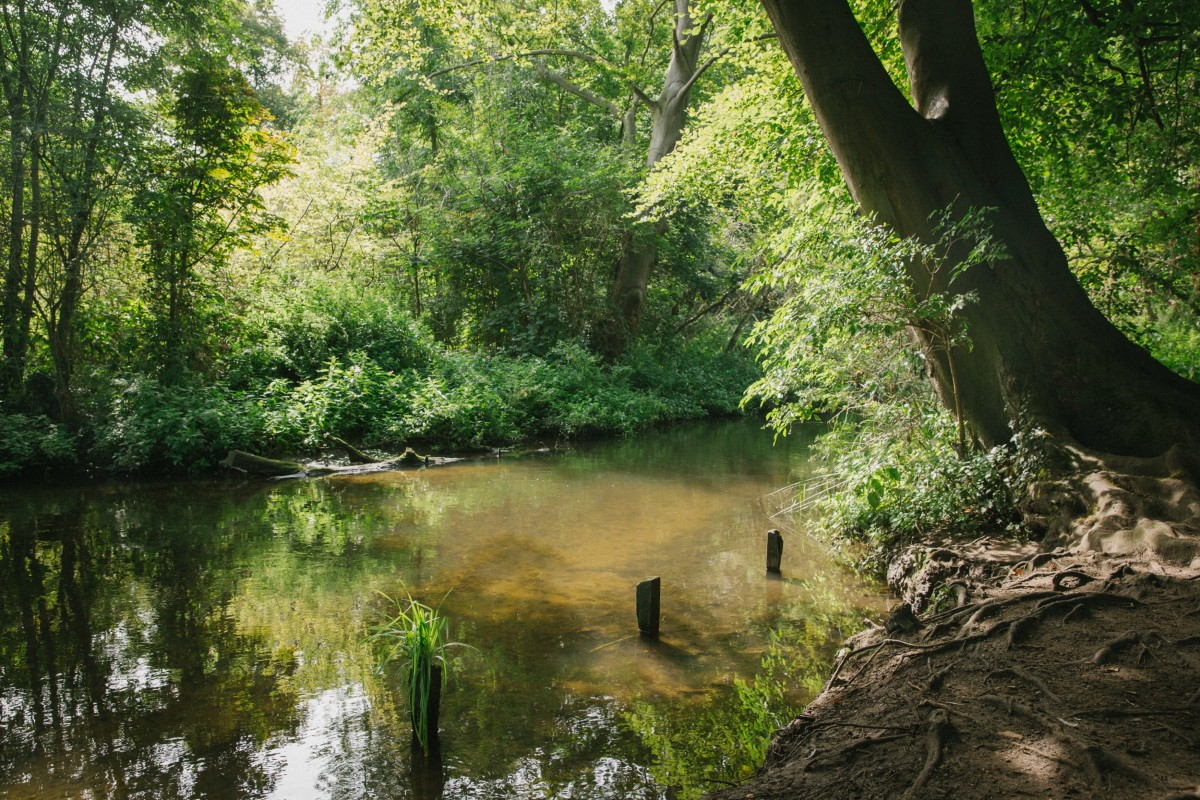 River Wandle at Morden Hall Park