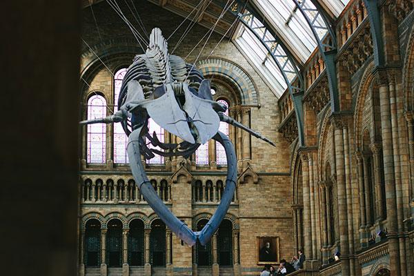 whale-600x400