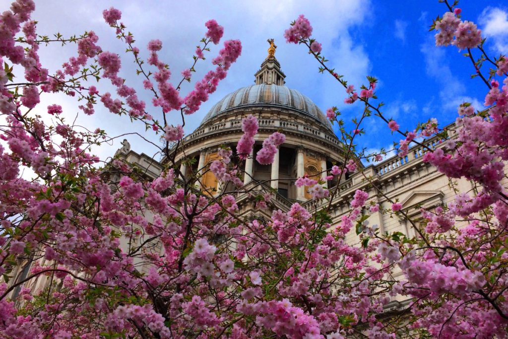Spring blossoms outside St Paul's Cathedral
