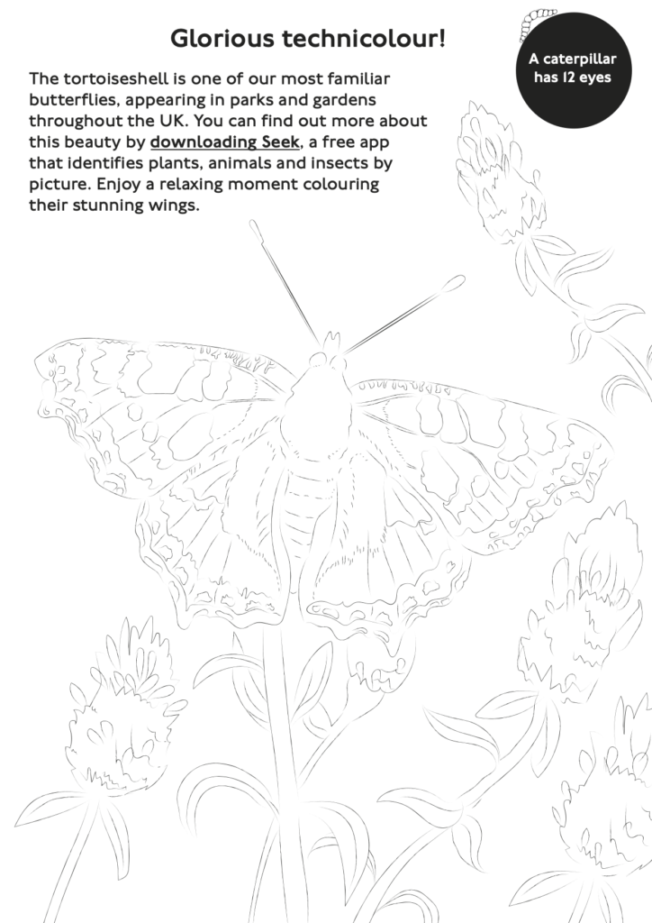 Butterfly colouring activity sheet