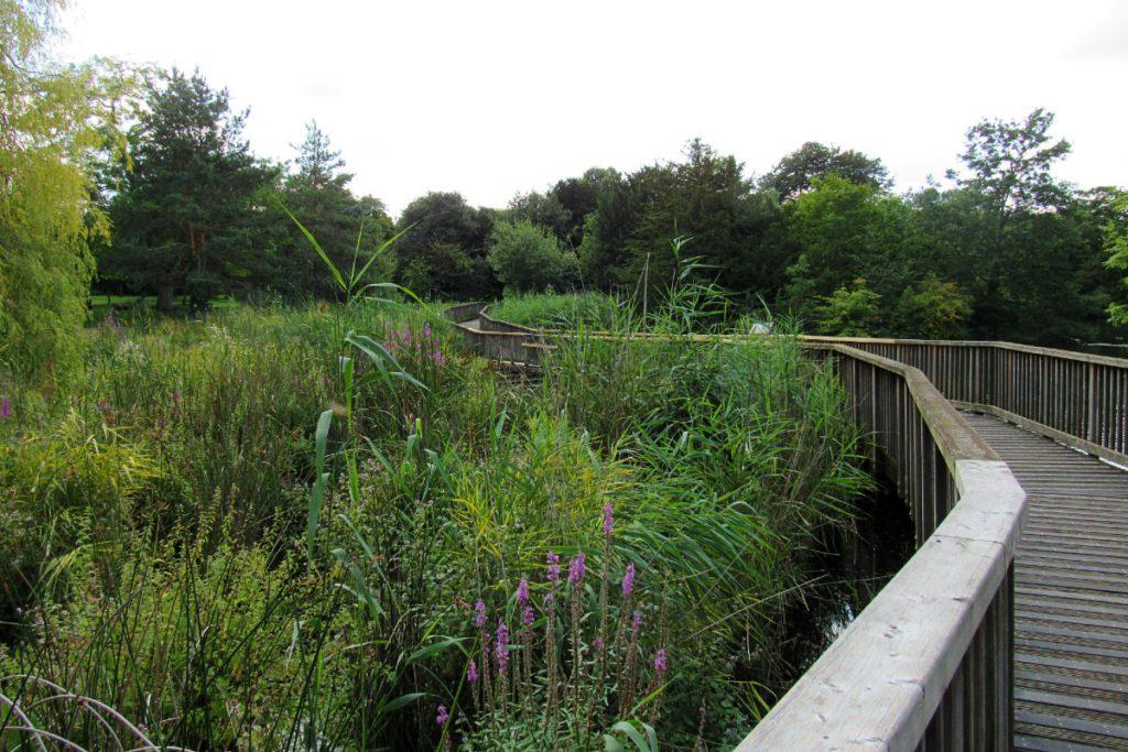 Dulwich Park pathway